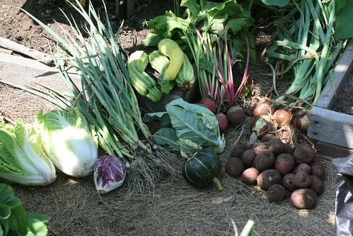 7-28 harvest 083