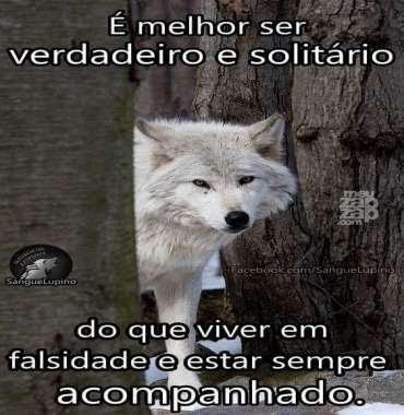 Meu Zapzap Imagens Lobo Solitário Reflexão Para Whatsapp E Facebook