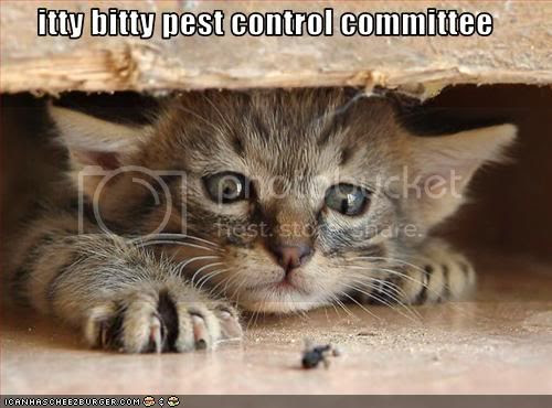 cat pictures with captions photo:  funny-pictures-cat-controls-bugs.jpg
