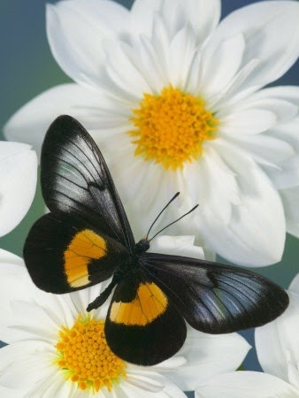 flowersgardenlove:  Miyana Meyeri Butter Beautiful  THE PERFECT RELATIONSHIP The flower and the butterfly need each other to survive in this harsh world. People can learn from this and create their own symbiotic relationships.