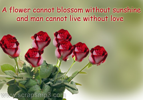 Rose Flower Rose Flower Quotes Images