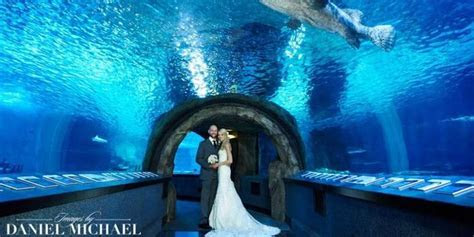 Newport Aquarium Weddings   Get Prices for Wedding Venues