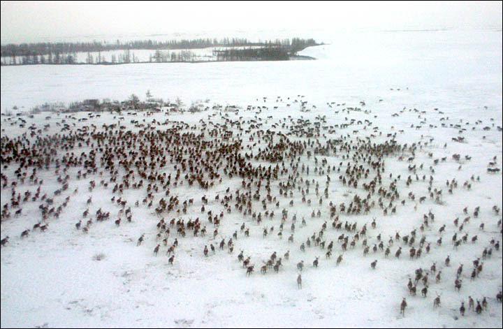in the Yamalo-Nenets Autonomous Okrug