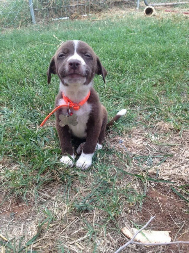 Try to see this post and never smile animals, photo