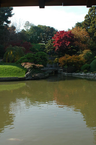 Pond and bridge in the Japanese Garden