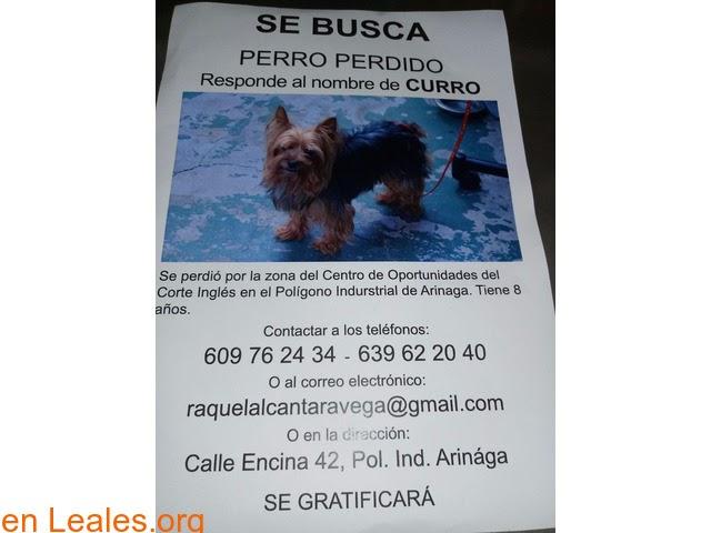 Perros perdidos o encontrados » Las Palmas - Gran Canaria » Curro se perdió » Tiene 8 años y se perdió en la zona del Polígono de Arinaga, por la zona del centro de oportunidades de El Corte Inglés....