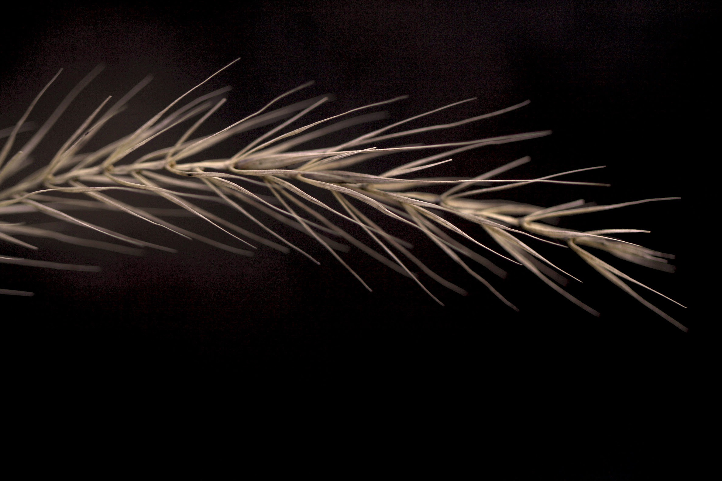 spiky frond