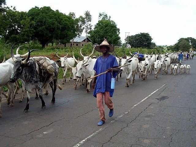 Benue anti-open grazing law: Herdsmen reveal next line of action