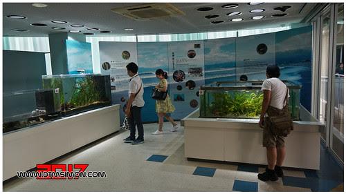 新江之島水族館40.jpg