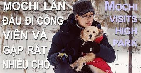 Cuộc sống Toronto - Mochi lần đầu đi công viên High Park - Công viên dành cho chó.