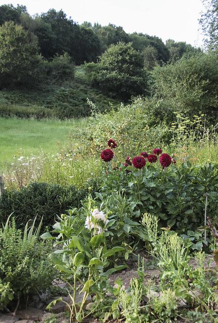 Aline's garden