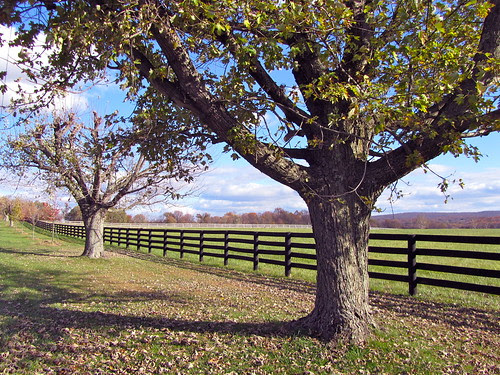 Fauquier County, Virginia by Edna Barney