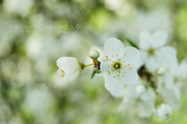 Morning blossoms