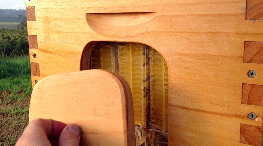 nueva-colmena-apicultura-miel-grifo-stuart-cedar-anderson (2)