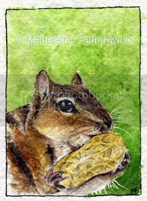 Chipmunk ACEO