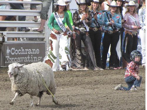 Mutton Busting #2