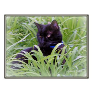 Bombay Black Cat Print Print