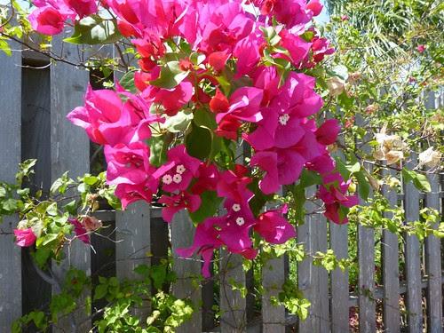 flowers in rockport