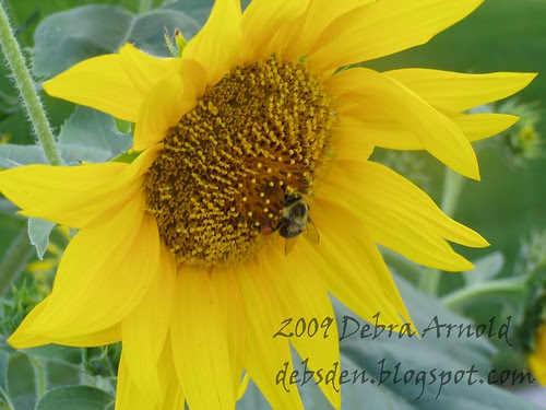 Bee_and_Sunflower2a