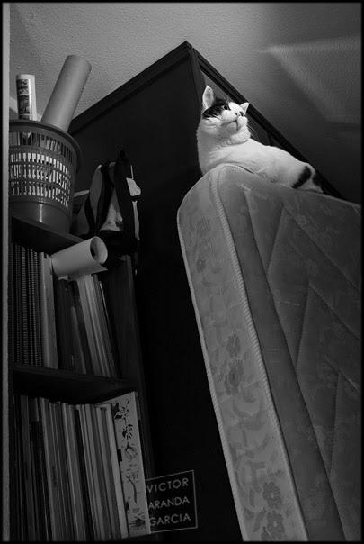 René sobre un colchón