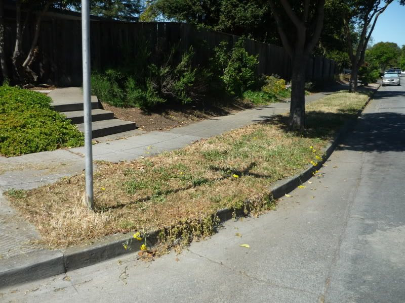 Park Strip Before Landscaping Project