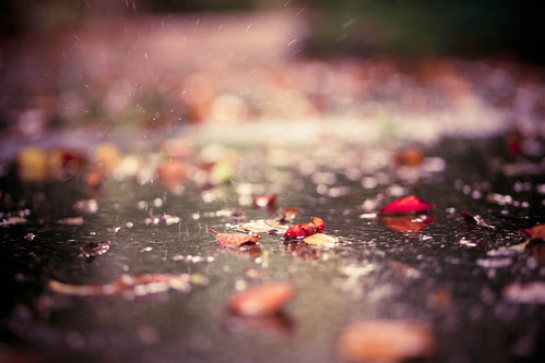 Fallen leaves with falling rain... (explore)