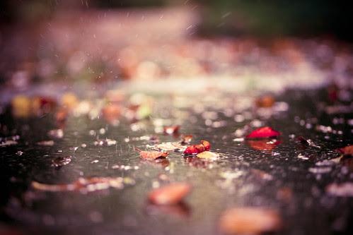 Fallen leaves with falling rain... (explore)