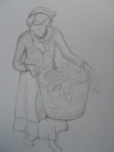 illustrations 081