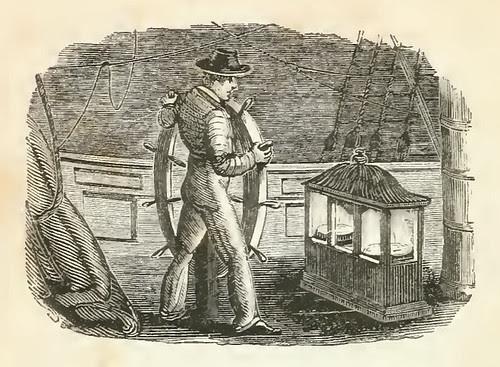 Mercator et Nauta