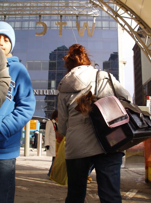 yorkie in handbag, World Trade Center, Manhattan, NYC
