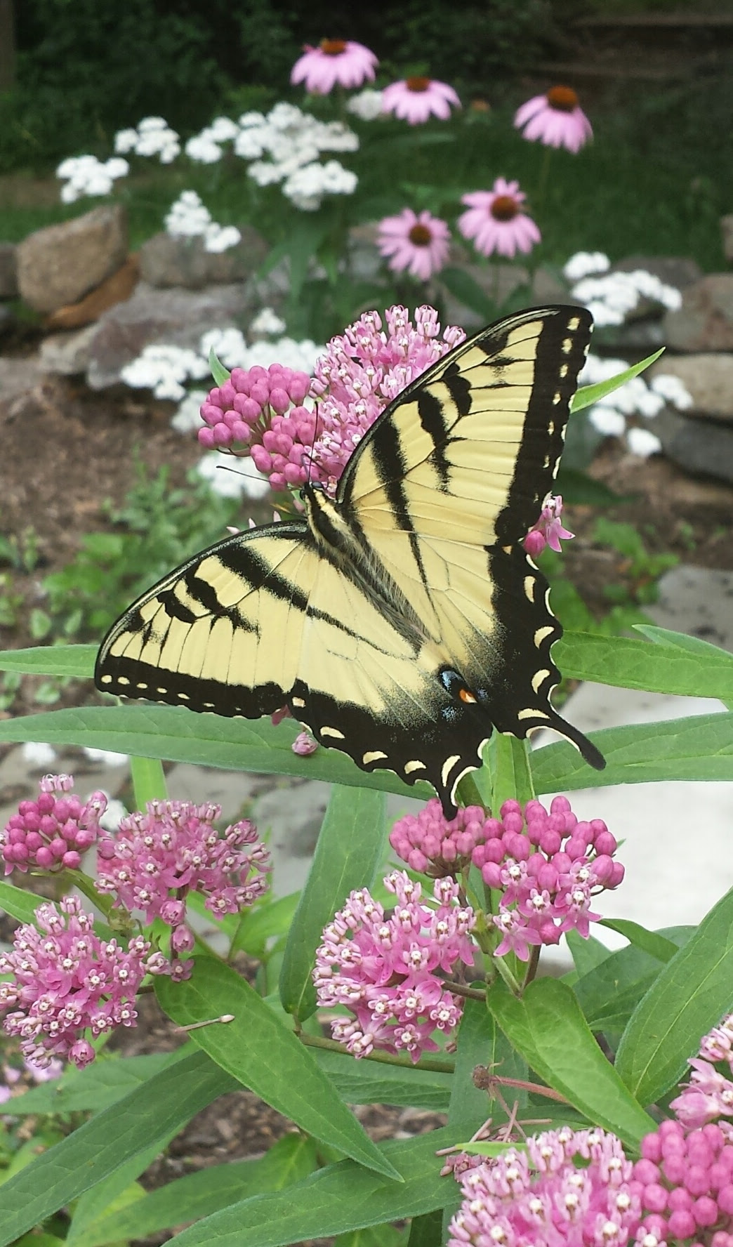 Butterfly Garden – County of Union, New Jersey