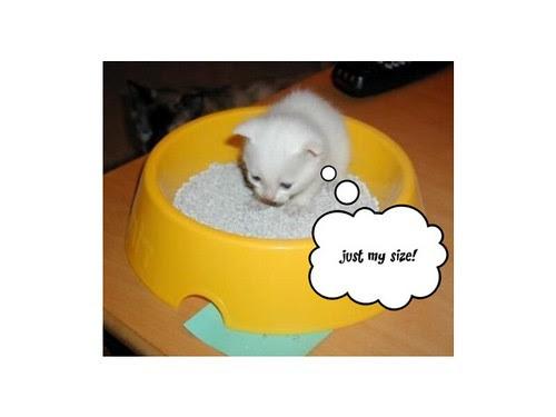 """Kitten in """"sandbox"""""""