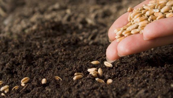 Resultado de imagem para Governo inicia distribuição de 645 toneladas de sementes nesta segunda (20)