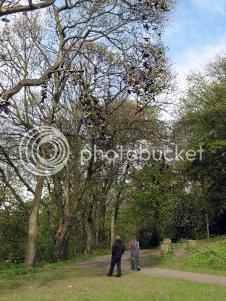 Photo - Heaton Shoe Trees