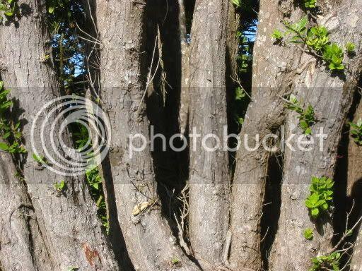 A tree, I guess.