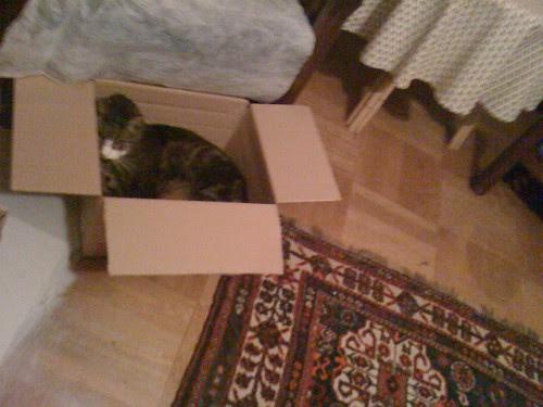 Morris in a Carton