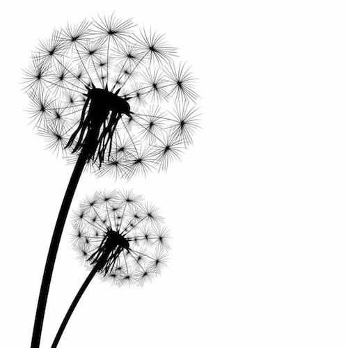 Dandelion Tattoo Meaning Tattoos With Meaning