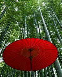 Bambooi