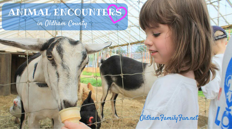photo Animal Encounters Header 2_zpsgdikk1dt.png