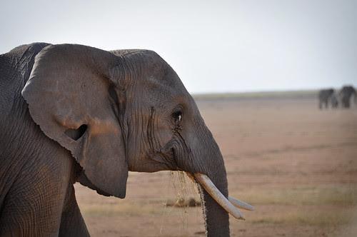 ElephantHeart