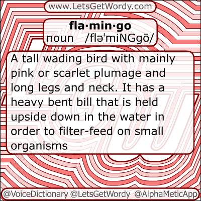 Flamingo 12/26/2012 GFX Definition of the Day