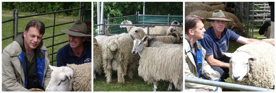 Chris Packham meets some sheep