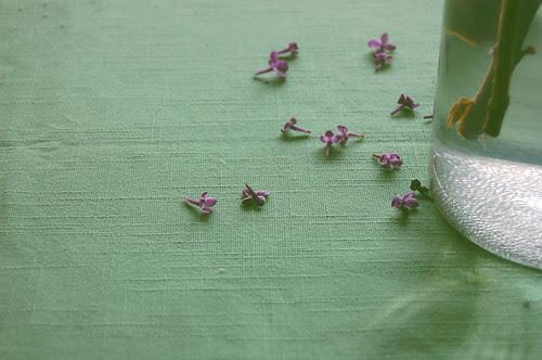 lilacs, disheveled