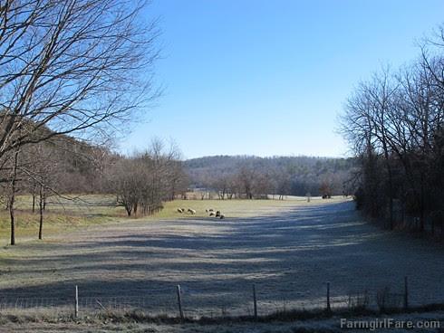 Slowly defrosting in the hayfield (2) - FarmgirlFare.com