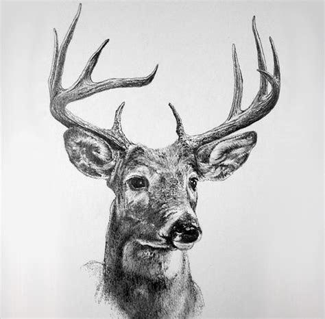 deer drawings designs  premium templates