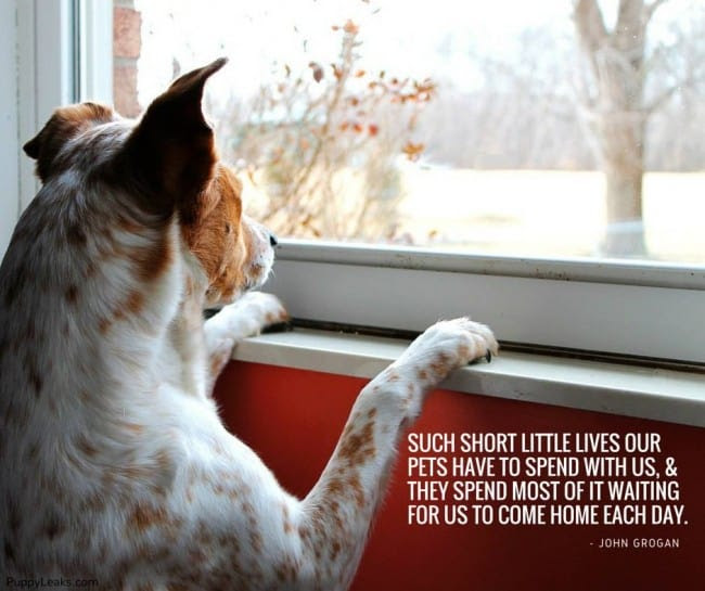 27 Inspirational Dog Quotes about Life and Love | PlayBarkRun