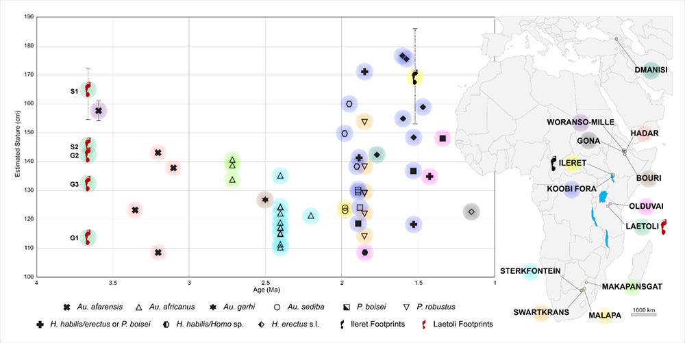 Stature estimates for early hominins from Masao et al. 2016