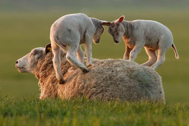 Υπέροχες φωτογραφίες φιλίας ζώων που θα σας φτιάξουν τη διάθεση (16)