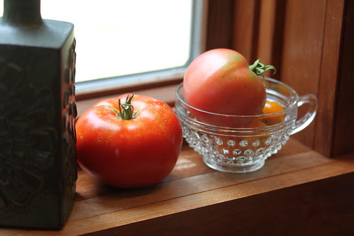 tomatoes on the window sill