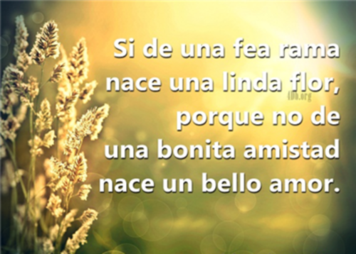 Frases De Amor Para Una Amiga Imagui